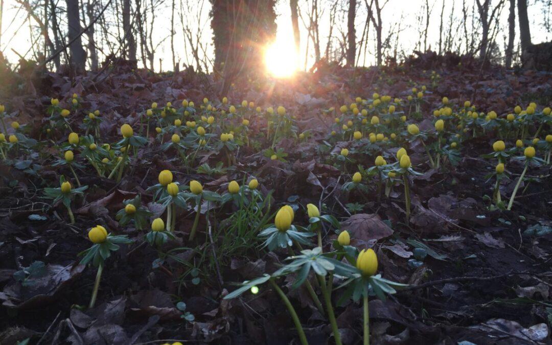 Vårkänslor på Bellevue Park